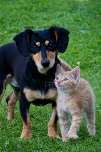 Animal Cruelty Attorneys Ohio. Dog and Cat