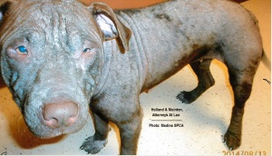 Medina Ohio Attorneys Animal Cruelty Case