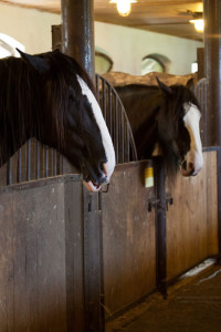 Ohio Equine Attorneys: Stables, Boarding, Farriers, Liability, Horse Breeding, Equestrian Clubs, Equine Corporations