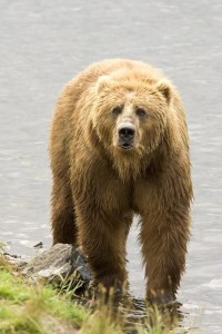 Bear (Ohio Wildlife Sanctuary Attorneys)